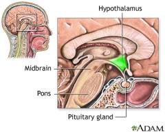Hypothalamus & Pituitary Gland
