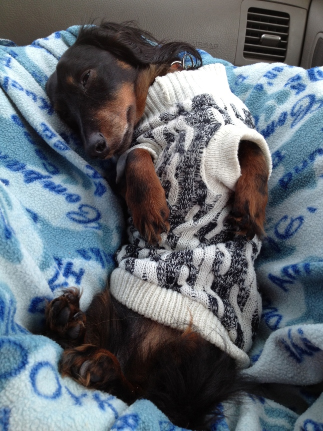 Even man's best friend doesn't mind the cold!  Just keep them warm!